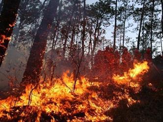 私设电网猎野猪 引火灾致一百多亩山林被烧