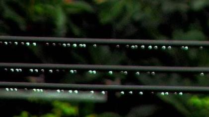 这位才女给雨中的电线作了一首诗
