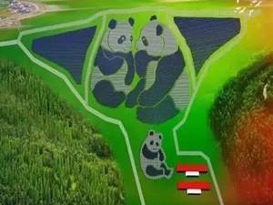 全球首个熊猫电站在山西大同正式投入运营