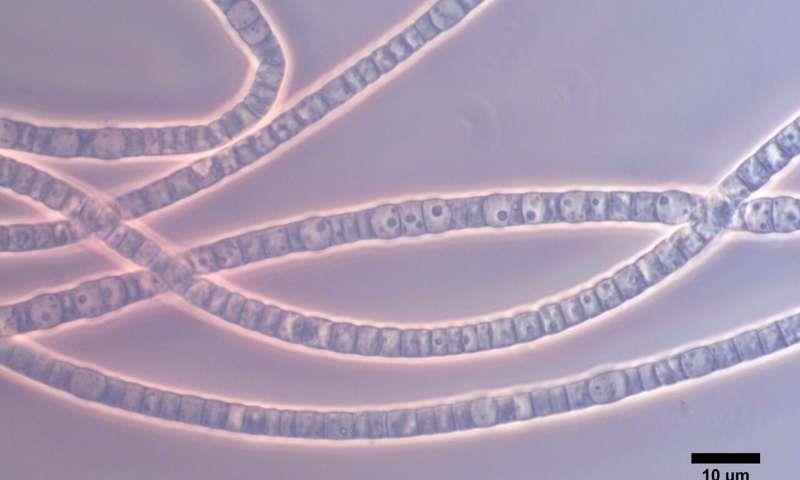 欧洲科学家发现电缆细菌:具有高导电性